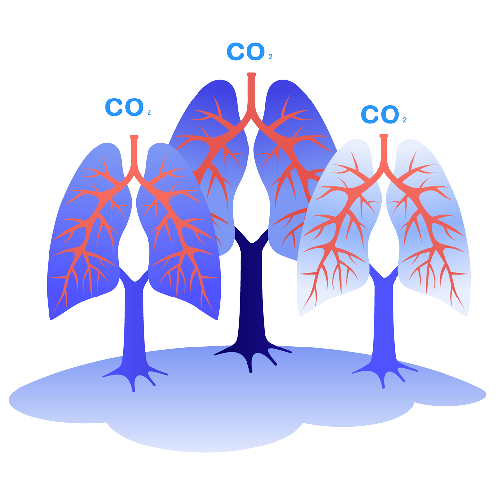 tree lungs blue illustration